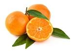 mandarineok.jpg